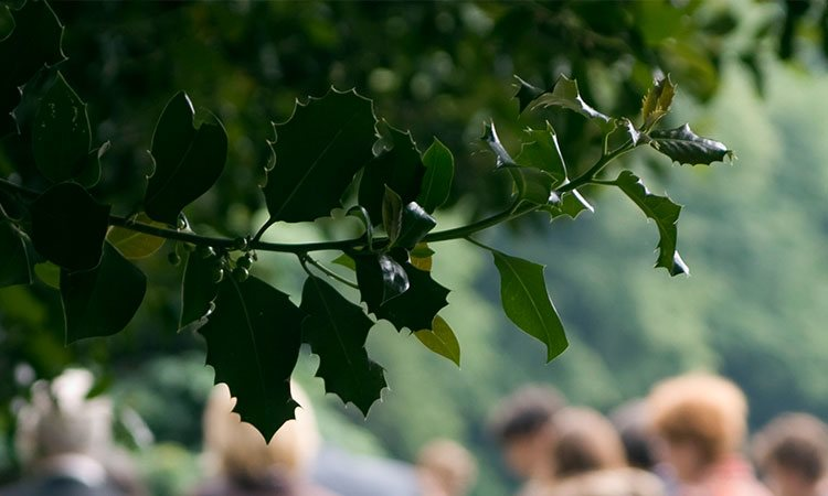 Green branches with funeral service in background